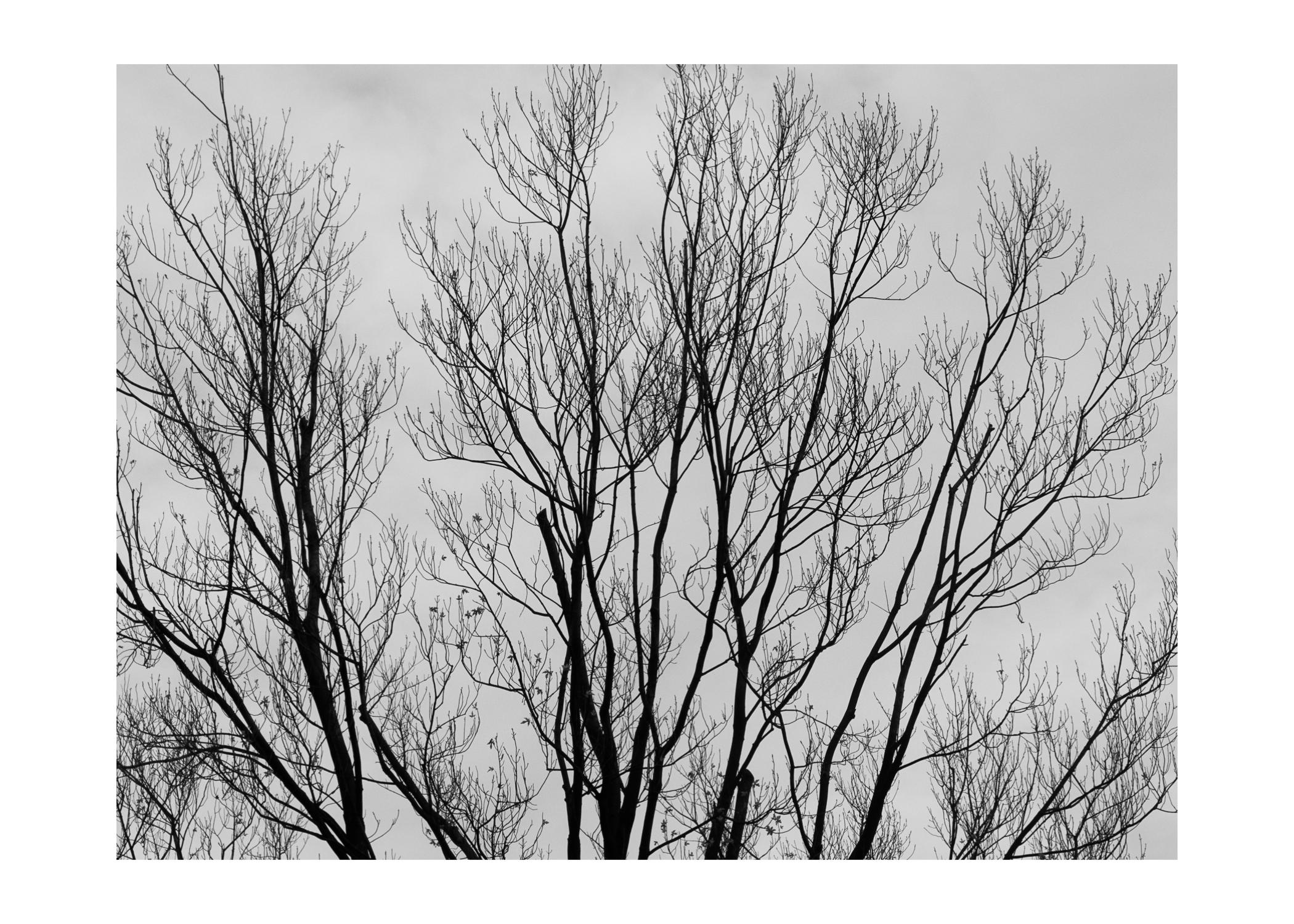 2012 Bomen in tegenlicht