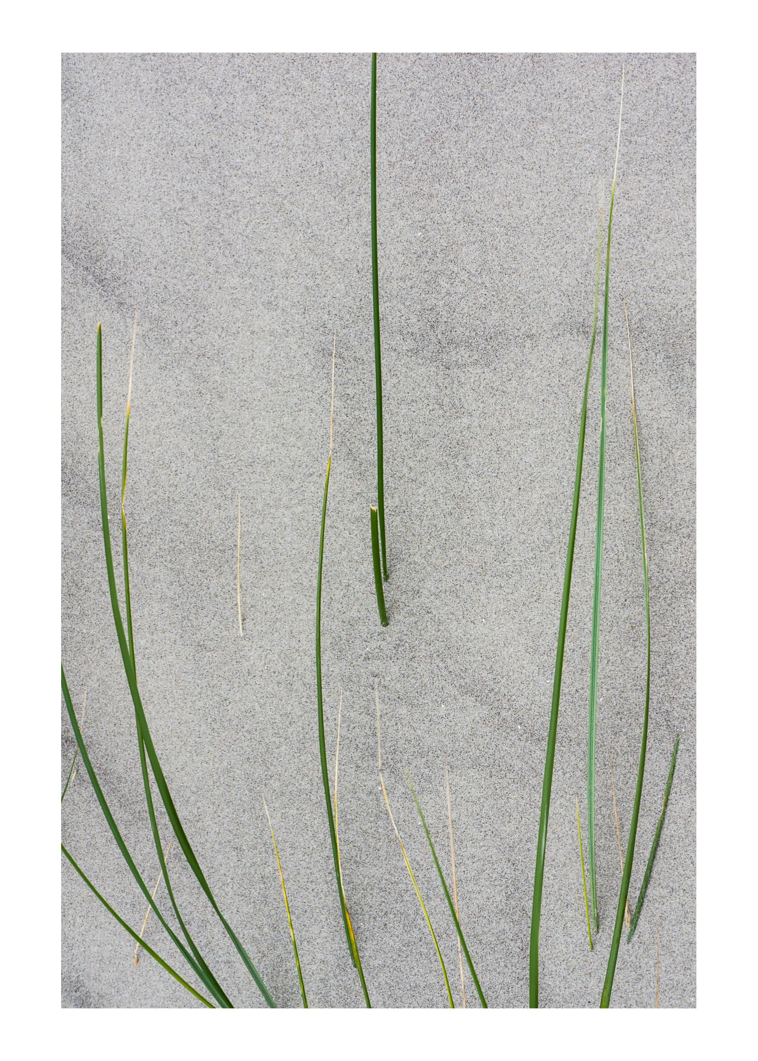 2013 Ameland strand grassprieten