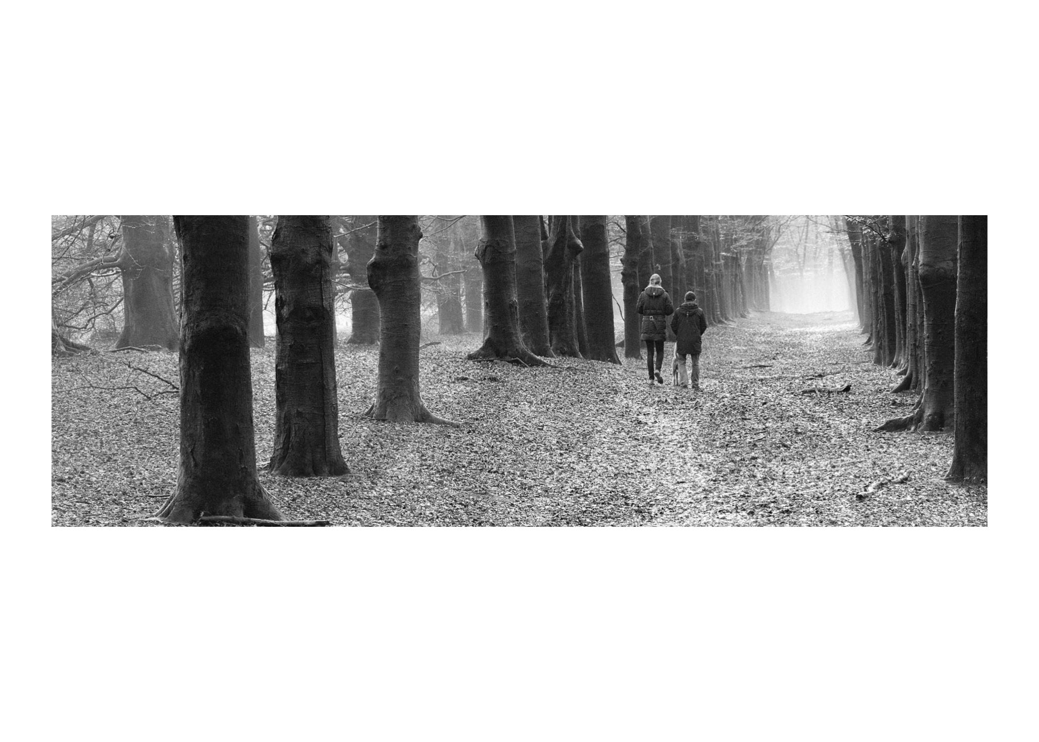 2015 Bos Piramide van Austerlitz met wandelaars