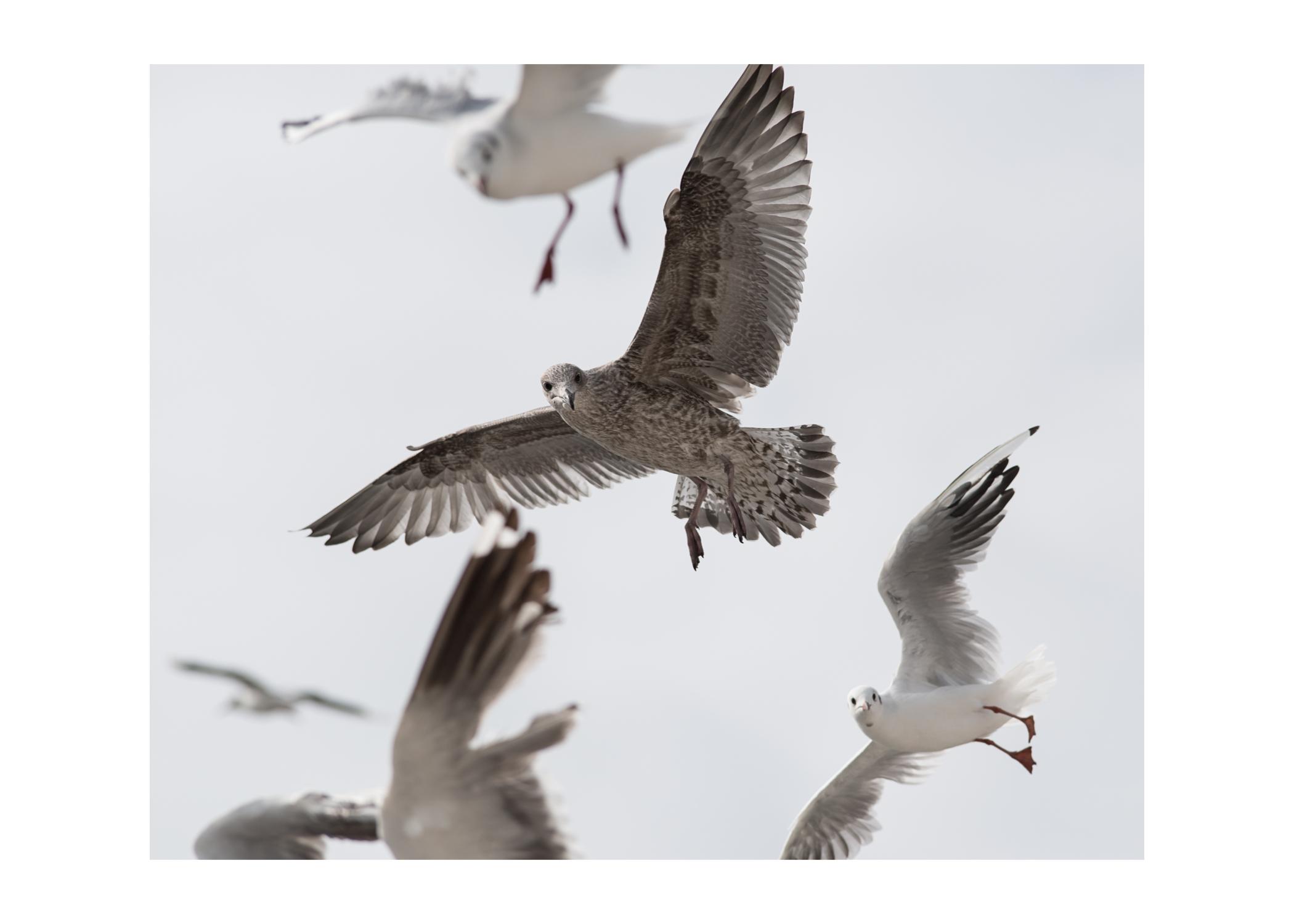 2016 Texel vogels